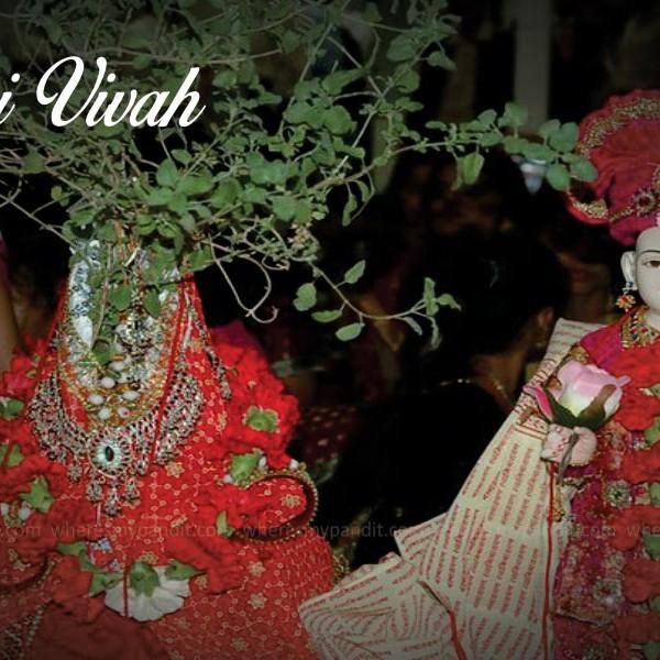 Tulsi Vivah (तुलसी विवाह)